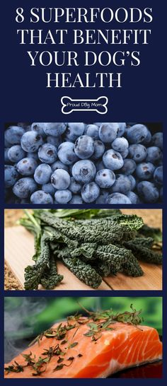 8 Superfoods That Benefit Your Dog's Health | Dog Health Tips | Healthy Dog Treats | Healthy Dog Food |