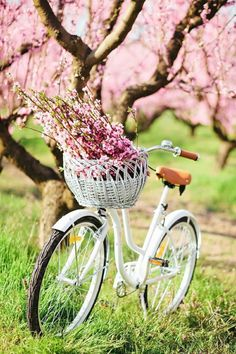 Beautiful spring inspiration with spring quotes and spring aesthetic! #spring #springquotes #quotes #aesthetic Vintage Nature Photography, Landscape Photography, Photography Flowers, Food Photography, Carpe Diem, Vintage Flowers, Pink Flowers, Pink Trees, Elegant Flowers
