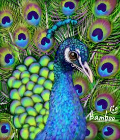 10 Winners from the Peacock Drawing Challenge - Create + Discover ...