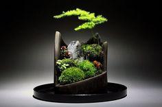 spectacular bonsai mini ideas home decoration