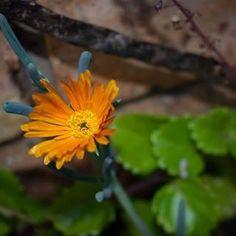 Home Graphic Design, Website, Plants, Photography, Photograph, Fotografie, Photoshoot, Plant, Visual Communication