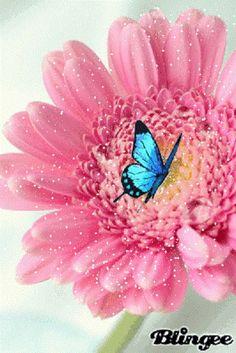 """Borboletas são tão belas!   : PENSAR É NÃO COMPREENDER """"Creio no mundo como num ..."""