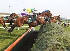 Grand National - I was born on Grand National Day! Horse Fly, Race Horses, Horse Racing, Grand National Horses, High Horse, Types Of Horses, Sport Of Kings, Thoroughbred Horse, Ponies