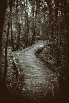 Treading the Boards (2016). At the start of the Currawong Falls Circuit Walk, there is a series of boardwalks, these snake through some very soggy ground into the Great Otway National Park forest. Aireys Inlet, Vic. Australia. Image: © Gary Light. Creative Commons: (CC BY-NC-ND 4.0). #photography #hiking #walking #nature #landscape #victoria #australia #forest #aireysinlet