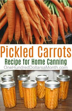 Canning 101 - Pickled Dill Carrots - One Hundred Dollars a Month - I recently got an email from reader, Susan, about pickled carrots. They looked so amazing I emailed - Canning Pickles, Canning 101, Home Canning, Canning Recipes, Canning Jars, Mason Jars, Dill Carrots, Canned Carrots, Pickled Carrots
