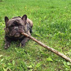 37af7ba7aae 84 nejlepších obrázků z nástěnky bulldog