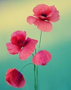 Que sejam bem-vindas todas as flores, todas as cores e as pequenas alegrias que fazem tão bem para o nosso coração. Rosi Coelho https://www.facebook.com/pages/Enquanto-houver-sol/255590874593300?fref=ts