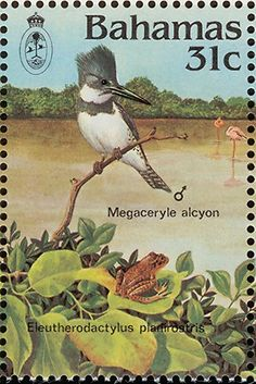 Belted Kingfisher stamps - mainly images - gallery format