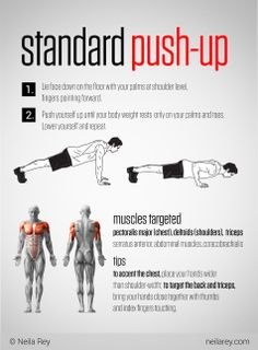 Standard Push-Up + Muscle Map