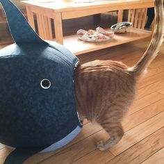 This handsome tabby ginger cat is Harry, and you can find him on Instagram under harrycatofallcats. Harry spends his time handing out in his shark Cat Ball� cat bed, destroying toys, and modeling for his human, who does great cat art.