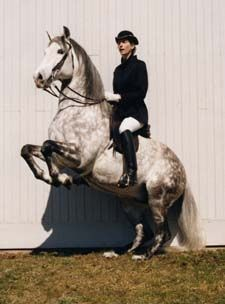 Bettina Drummond in the most amazing Levade. Look at the position and the happy horse. She is a true Master.