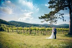Times New Roman, Bad Vöslau, Videos, Vineyard, Country Roads, Mountains, Nature, Travel, Outdoor