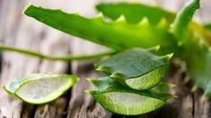 Полезные свойства алоэ Существует множество видов алоэ, довольно сильно отличающихся друг от друга своими свойствами, однако наиболее привычное нам растение алоэ вера давно зарекомендовало себя как лекарственное. Оно растет в домах у многих людей, находится под рукой круглый год и приходит на помощь в абсолютно разных ситуациях.  Сочные мясистые листья алоэ содержат эфирные масла, ферменты, антрагликозиды, витамины, аминокислоты, минералы, полисахариды, фитонциды и даже салициловую кислоту…