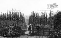 Farnham, Hop Gardens From The Francis Frith Collection, a privately-owned archive of over photographs of Britain from that you can browse online for free anytime. Vintage Farm, Countryside, Britain, Past, Nostalgia, Gardens, Farming, Places, Archive