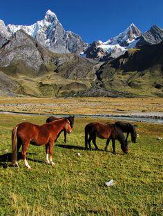 Horses-Jirishanca-Huayhuash.  PERU (by mikemellinger, via Flickr)