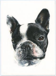 Bulldog Francés. French Bulldog. Ilustración lápiz. Illustration pencil. Dog portrait French Buldog, Minnie, Boston Terrier, Illustration, Dogs, Animals, Bulldog Frances, Portraits, Greyhounds