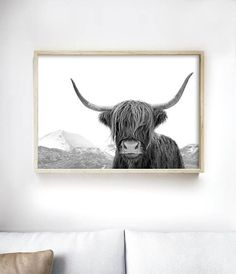 Highland Cow Art Print   Black and White Photography Print by Little Ink Empire.