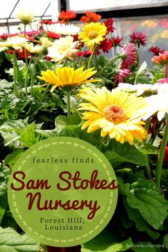 Sam Stokes Nursery in Forest Hill, Louisiana | bonveillercher.com
