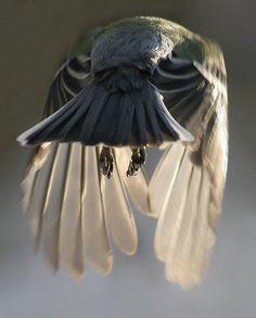 crow rear view