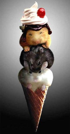 mice cream cone ^ (really hamsters) Funny Hamsters, Funny Cats, Ferrets, Cute Little Animals, Cute Funny Animals, Funny Animal Pictures, Cute Pictures, Funny Images, Funny Photos