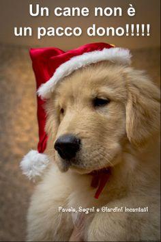 """Perché un cane non sia """"A DICEMBRE DONO E AD AGOSTO ABBANDONO""""!!!!!!!  © Favole, Sogni e Giardini Incantati su Facebook"""