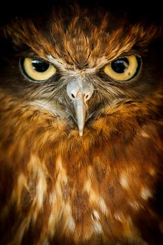 The intense stare of an owl. The owl species and photographer are unknown. Beautiful Owl, Animals Beautiful, Cute Animals, Gorgeous Eyes, Simply Beautiful, Beautiful Images, Regard Animal, Owl Pictures, Look Into My Eyes