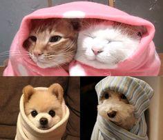 SOS Animal com amor: Inverno chegando cuidados especiais para seus pets