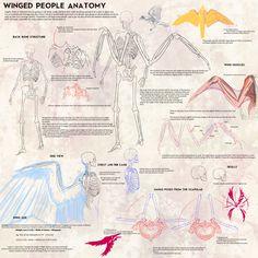 Winged People Skeletal Anatomy by Blue-Hearts.deviantart.com on @deviantART