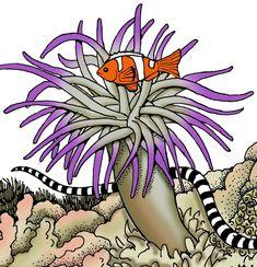 clown fish habitat - Cerca amb Google