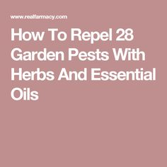 How To Repel 28 Garden Pests With Herbs And Essential Oils