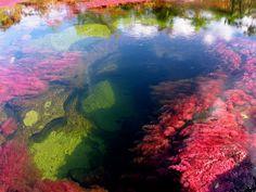 This is Colombia Caño Cristales, rio de los 5 colores