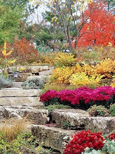 Fall Garden Bargain Tips - As the growing season comes to an end, smart shoppers can snap up plants at bargain prices.