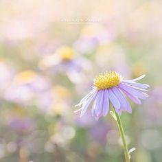 Pastel coloured flower photo. #sunshine #lilac #bokeh Lilac Flowers, Day And Time, Flower Photos, Bokeh, Sunshine, Pastel, Mood, Makeup, Instagram Posts
