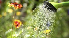 Mit diesen Tipps gießen Sie Ihre Pflanzen bei der Sommerhitze richtig.