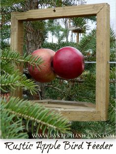 diy fresh fruit bird feeder.  Could probably make w/ $1 store frame, metal skewers, and something for the landing.