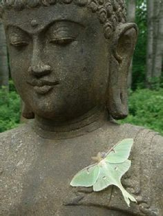 Buddha and Luna Moth