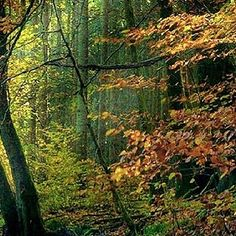 Almádi Ildikó Ősz… Egy délutáni séta alkalmával pillantottam meg ezt a gyönyörű tájat. Több kép Ildikótól: www.facebook.com/ildiko.almadi Trunks, Marvel, Facebook, Plants, Drift Wood, Tree Trunks, Plant, Planets