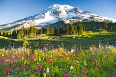 Mt Rainier National Park, US There is nothing like a picturesque view of a wildflower field in springtime with snow-capped mountain peaks on the background. This is where one can really feel the powerful breath of nature. The sub-alpine meadows are typically at their most colorful state in late July and early August.