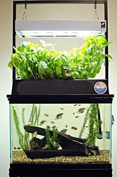 Discover the ECO-Cycle Aquaponics Kit. Combine aquaculture & hydroponics for a unique approach to sustainable gardening. Aquaponics Greenhouse, Backyard Aquaponics, Aquaponics System, Hydroponic Gardening, Organic Gardening, Aquaponics Plants, Hydroponic Fish Tank, Urban Gardening, Indoor Gardening