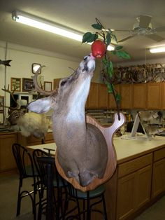 Whitetail Eating Apple. This is a sweet idea for someone who already has every style of mount.