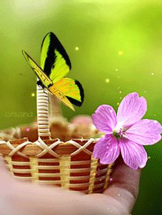 ca bouge - Page 29 Beautiful Love Images, Beautiful Flowers Wallpapers, Beautiful Butterflies, Cute Emoji Wallpaper, Flower Wallpaper, Pretty Gif, Butterfly Gif, Animated Gifs, Random Gif