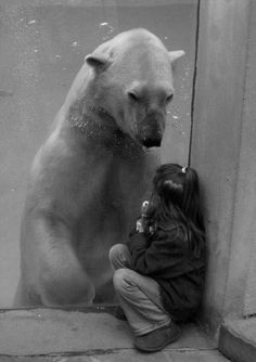 moment captured | sadness | connection | polar bear | mother nature | animal kingdom | www.republicofyou.com.au