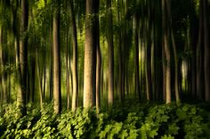 Forest Mom Kingdom Photo & image by dansiga ᐅ View and rate this photo free at fotocommunity. Abstract Photography, Nature Photography, Texture Art, Art Google, Trees To Plant, Mother Nature, Paths, Outdoor, Beautiful
