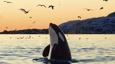 Petition · Free the Captive Orcinus Orcas · Change.org