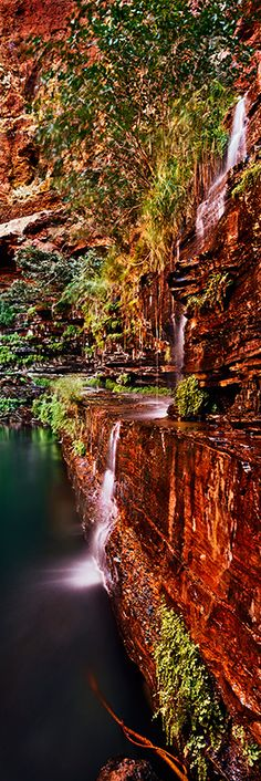 A natural spring flows from the gorge wall into Circular Pool. Karijini National Park. Pilbara, Western Australia