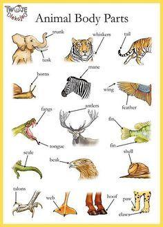 Animal body parts English vocabulary - Trunk, shell, whiskers etc English Time, English Fun, English Study, English Class, English Words, English Lessons, English Grammar, Learn English, Improve English