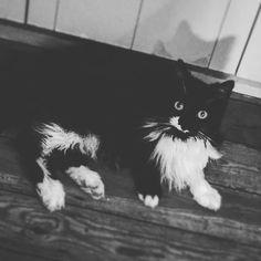 Socks feels like batman #cats #cat #family #batman #home