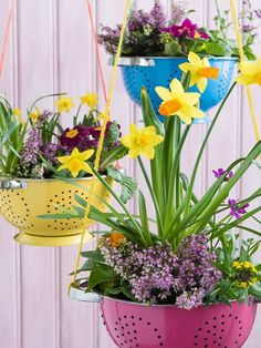 To add a fun splash of colour to your outdoor space, colanders in bold, bright colours look gorgeous when filled with colour annuals or bulbs.