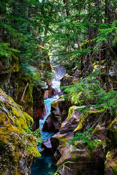 Avalanche creek,Montana,Glacier National Park