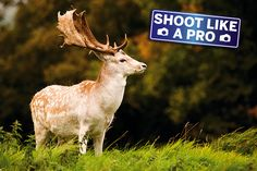 How to photograph anything: best camera settings for wildlife photography